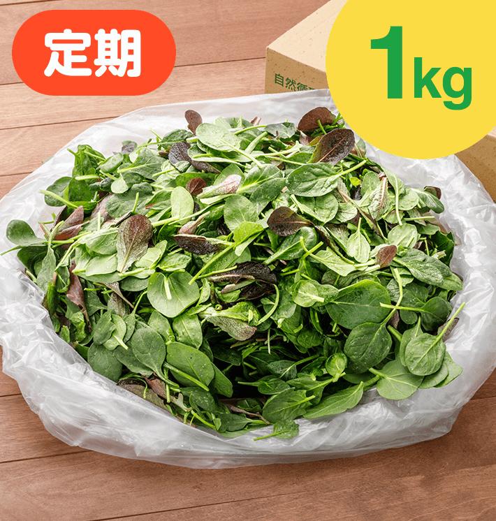 【お得な定期購入】ベビーリーフ(1kg)