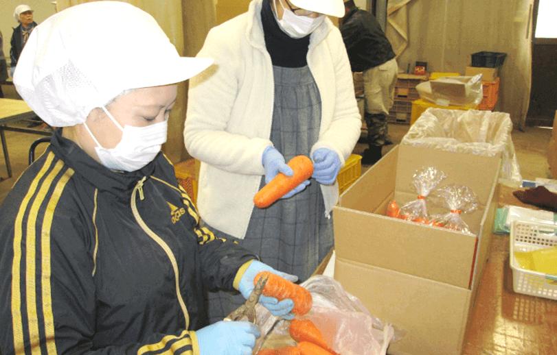 有機・無農薬にんじんの宅配出荷場での野菜選別作業