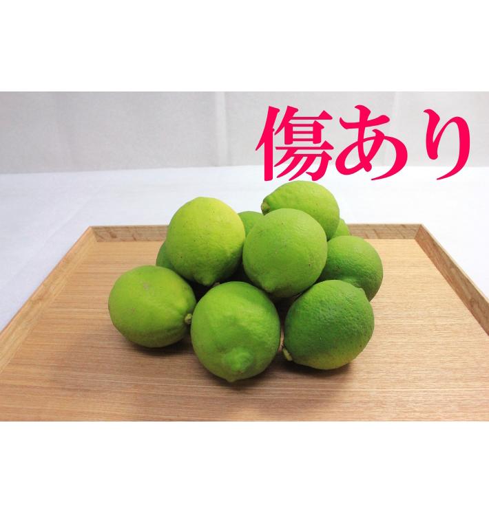 国産グリーンレモン 傷あり・傷なし込(1kg)